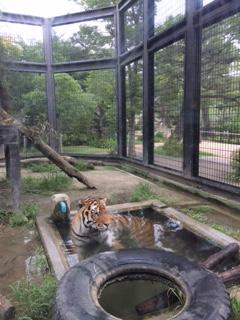 真夏の動物園