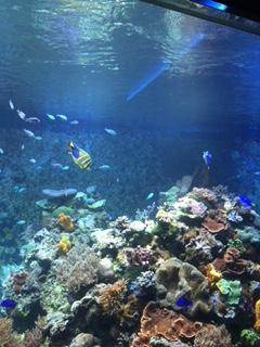 癒しの水族館