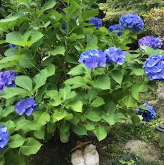 ムラサキの庭