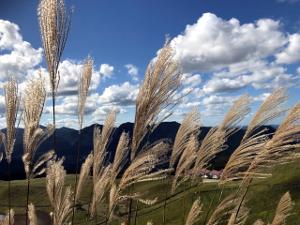 曾爾高原(奈良県と三重県の県境)