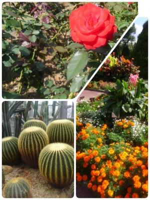 秋の楽しみ、植物園!
