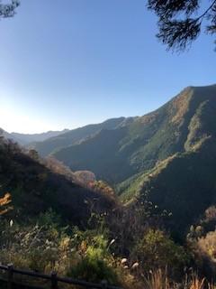 十津川村の奇跡